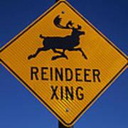 Reindeer Xing Poster