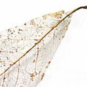 Remnant Leaf Poster