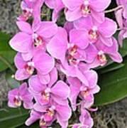 Resplendent Orchid Poster