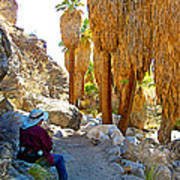 Rest Stop In Andreas Canyon Trail In Indian Canyons-ca Poster