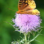 Resting On A Thistle Poster