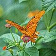Resting Orange Butterfly Poster