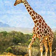 Reticulated Giraffe Kenya Poster