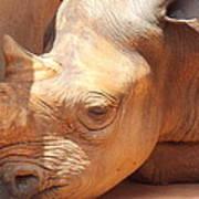 Rhino Naptime Poster