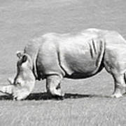 Rhinoceros Charcoal Drawing Poster