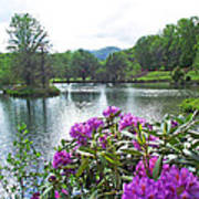 Rhododendron Blossoms And Mountain Pond Poster