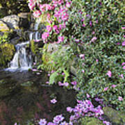 Rhododendron Flowers By Waterfall Poster
