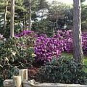 Rhododendron Garden Poster