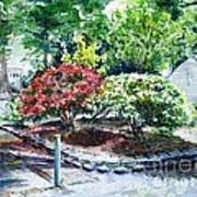 Rhododendrons In The Yard Poster