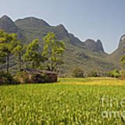 Rice Farm Poster
