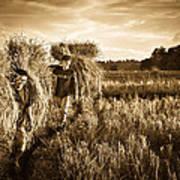Rice Harvesting Poster