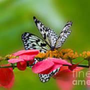 Rice Paper Butterflies Poster