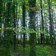 Ridgeway Trees Poster