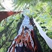 Rim Fire Yosemite  Poster