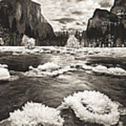 Rime Ice On The Merced In Black And White Poster