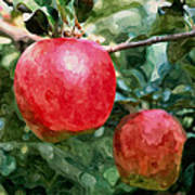 Ripe Red Apples On Tree Poster