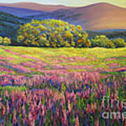 River Bank Lupines In California Poster