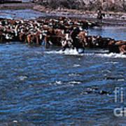 River Crossing Poster