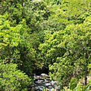 River Glimpses Poster