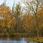 River In Autumn Poster by Rhonda Humphreys