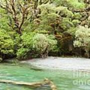 River In Rainforest Wilderness Of Fiordland Np Nz Poster