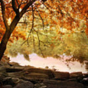Riverbank Maple Poster