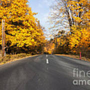 Road In Autumn Forest Poster