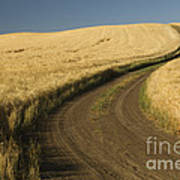 Road Through Wheat Field Poster