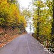 Road With Autumn Trees Poster