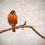 Robin With Damask Background Poster