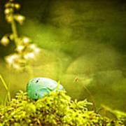 Robin's Egg On Moss Poster
