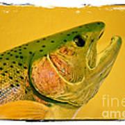 Rock Creek Rainbow Poster by Lauren Leigh Hunter Fine Art Photography