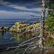Rock Formations And Trees On The Shoreline In Acadia National Park Poster