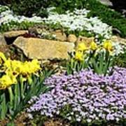 Rock Garden Flowers Poster