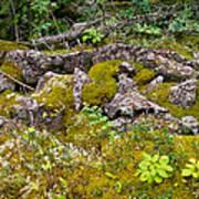 Rocks And Moss II Poster
