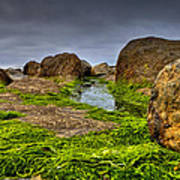 Rocks And Seaweed Poster