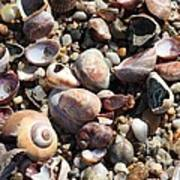 Rocks And Shells Poster