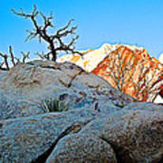 Rocks In Sun And Shade Along Barker Dam Trail In Joshua Tree Np-ca- Poster