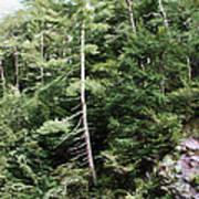 Mountain - Landscape - Trees - Rocky Hillside Poster