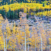 Rocky Mountain Autumn Contrast Poster by James BO  Insogna