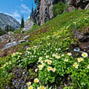 Rocky Mountain Summer Landscape Poster