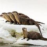 Romp Of Otters Poster