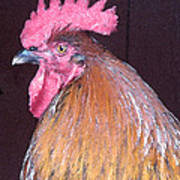 Rooster Watercolor Poster