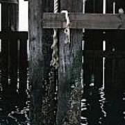 Rope On A Piling Poster