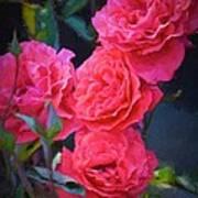 Rose 138 Poster by Pamela Cooper