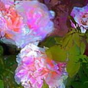 Rose 184 Poster by Pamela Cooper