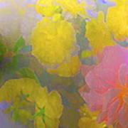 Rose 185 Poster
