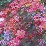Rose 199 Poster by Pamela Cooper