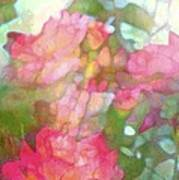 Rose 200 Poster