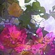 Rose 206 Poster by Pamela Cooper